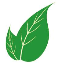 prostata-faydalı-gelen-bitkiler
